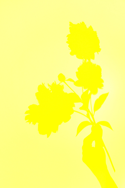 http://paulamccartney.com/files/gimgs/25_all-yellow-flower-shadow.jpg